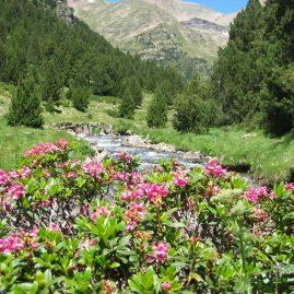 Paysage Andorran