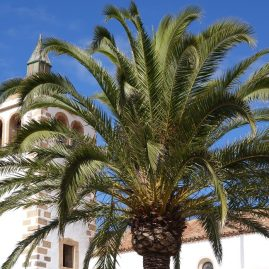 Eglise de Betancuria Fuerteventura Canaries sur savour.eu