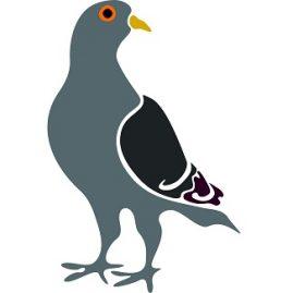 expression avec pigeon