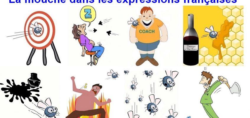 Expressions avec le mot mouche