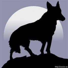 ebtre chien et loup