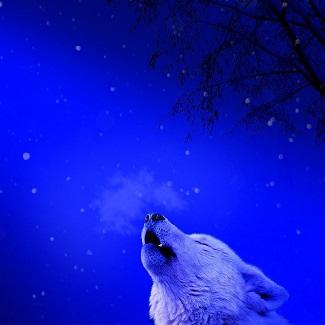 un froid de loup