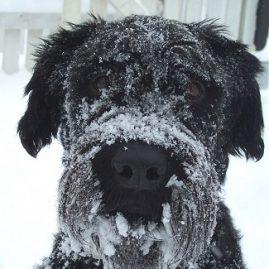 un froid de chien