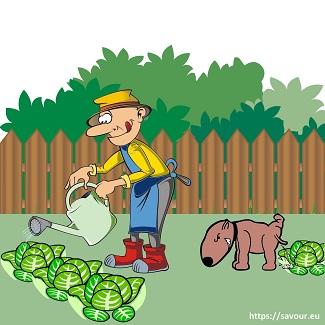 etre comme le chien du jardinier